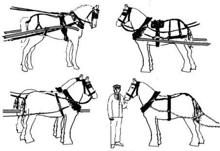 Hand Carts, Horse Drawn Vehicles and Bikes